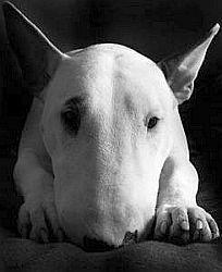 portrait-pet-photography.jpg