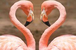 dynamic pink flamingos