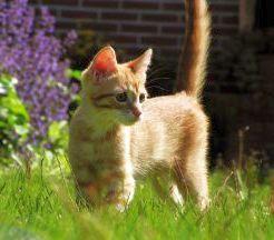 pet-photography-a-kitten-stalking-through-the-grass.jpg