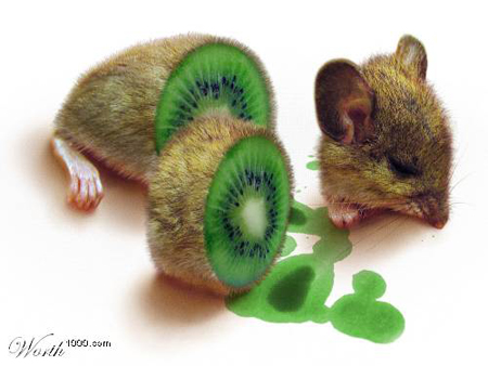 Kiwi Mouse Manipulation Photo by hongkiat.com