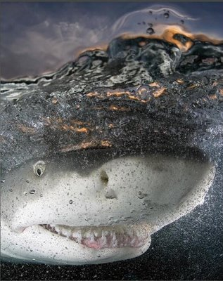Happy shark photo by jokewallpaper.blogspot.com